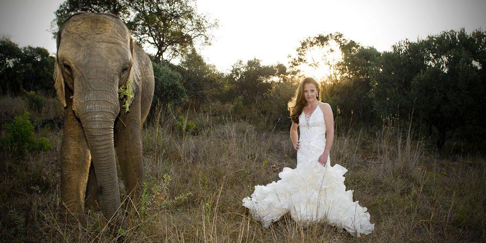 ian-cooper-wedding-photography-contact-elephant